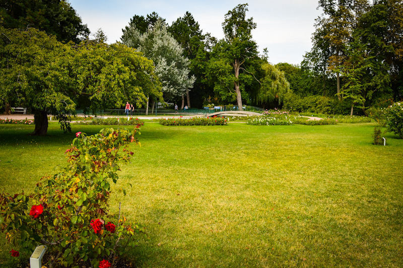 Park różany