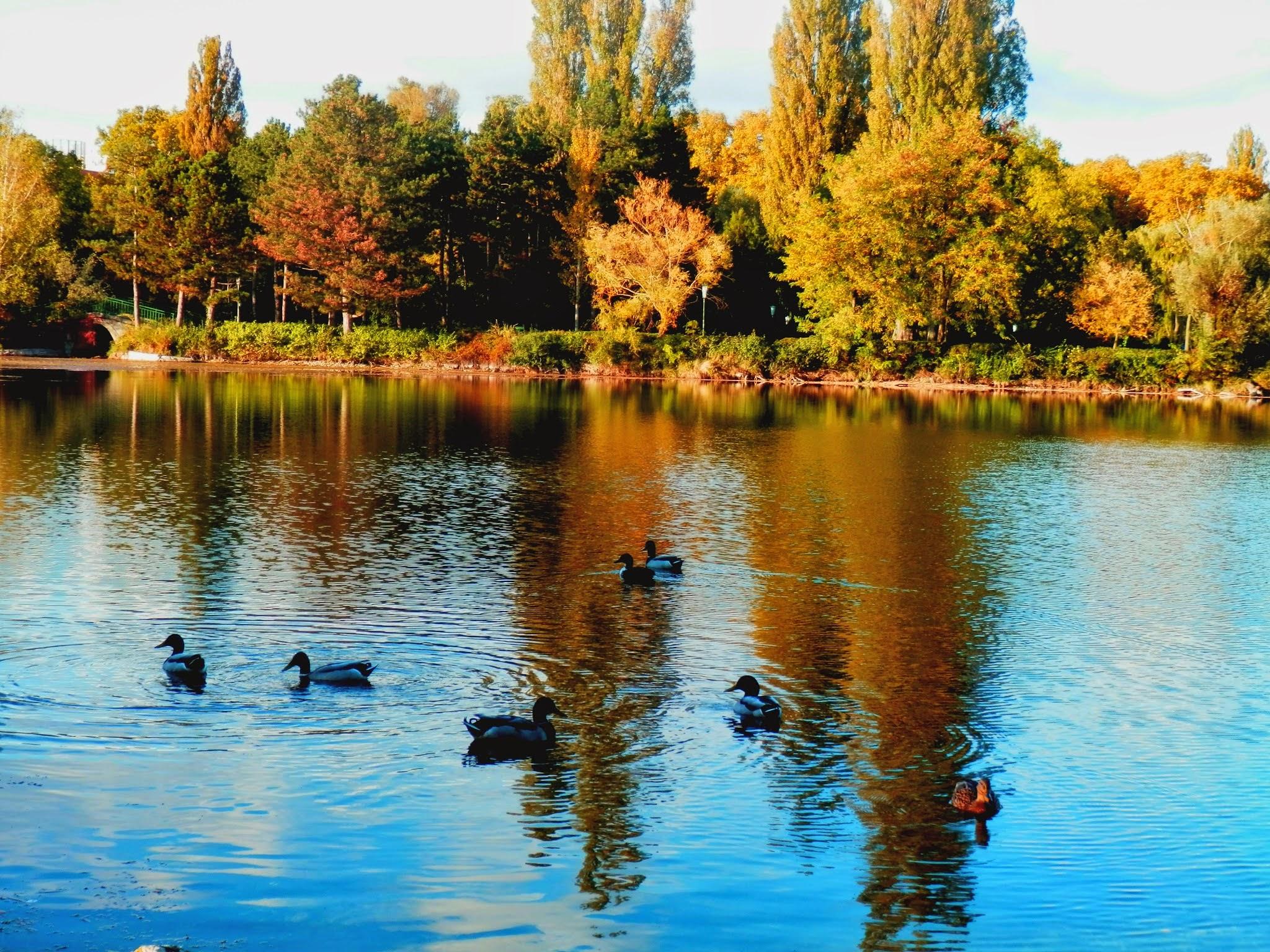 Floridsdorfer Wasserpark .....Wiedeń