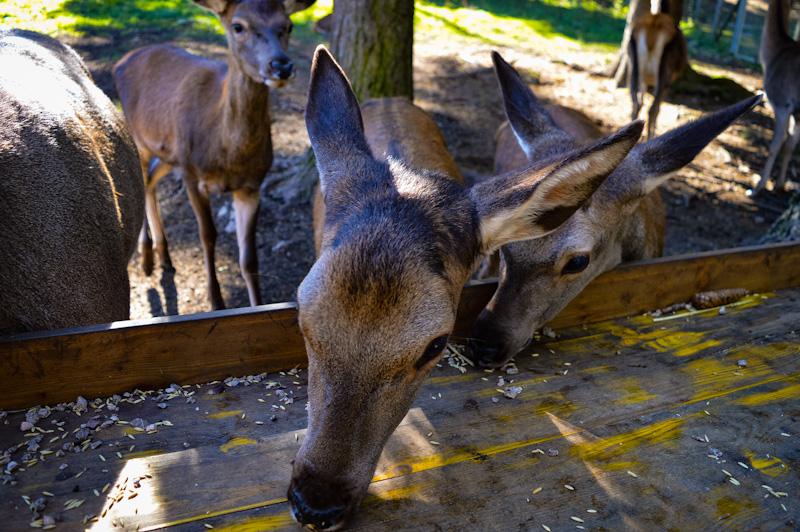 Zwierzeta Hohe Wand Mini Zoo dla dzieci